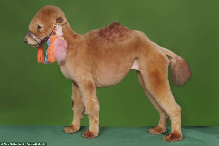 dog-as-camel