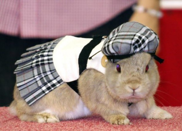 scottish rabbit