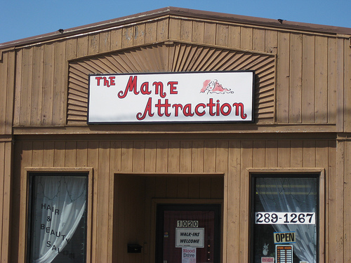 the-mane-attraction